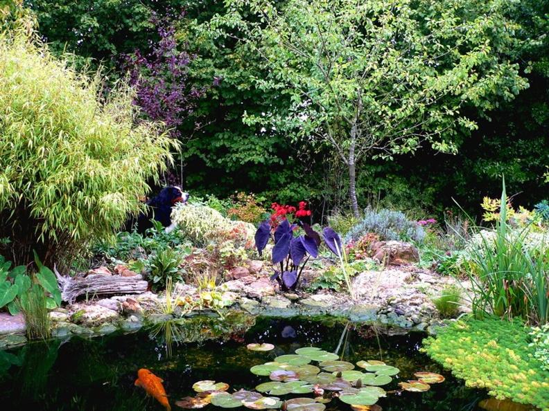 D co bassin canard bache 31 bassin - Bache jardin castorama nimes ...