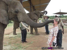 ; Big-kiss-from-an-elephant