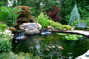 Koi-Pond-and-Award-Winning-Landscape-21-e1382058886786