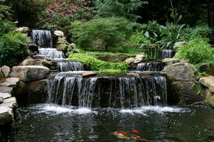 Koi-Pond-and-waterfalls-e1381884512652