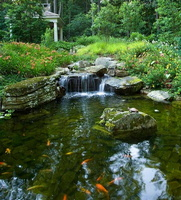 koi-pond-waterfall