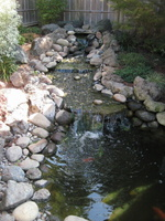 koi-pond-waterfall-8