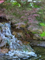 koi-pond-waterfall-9