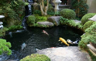 New-Koi-Fish-Pond-with-Japanese-Art-2012