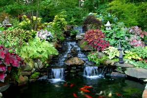 Waterfall-and-small-Koi-pond-e1382060860801