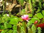 http://www.forum-bassin.com/photos/i.php?/upload/2014/06/14/20140614162444-6c350758-th.jpg