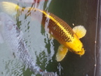 http://www.forum-bassin.com/photos/i.php?/upload/2014/06/17/20140617235954-9bfd5f8e-th.jpg