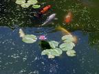 http://www.forum-bassin.com/photos/i.php?/upload/2014/06/18/20140618000035-c528bf6c-th.jpg
