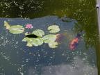 http://www.forum-bassin.com/photos/i.php?/upload/2014/06/18/20140618000041-f2414fc9-th.jpg