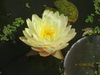 http://www.forum-bassin.com/photos/i.php?/upload/2014/08/12/20140812150644-b1c3146b-th.jpg
