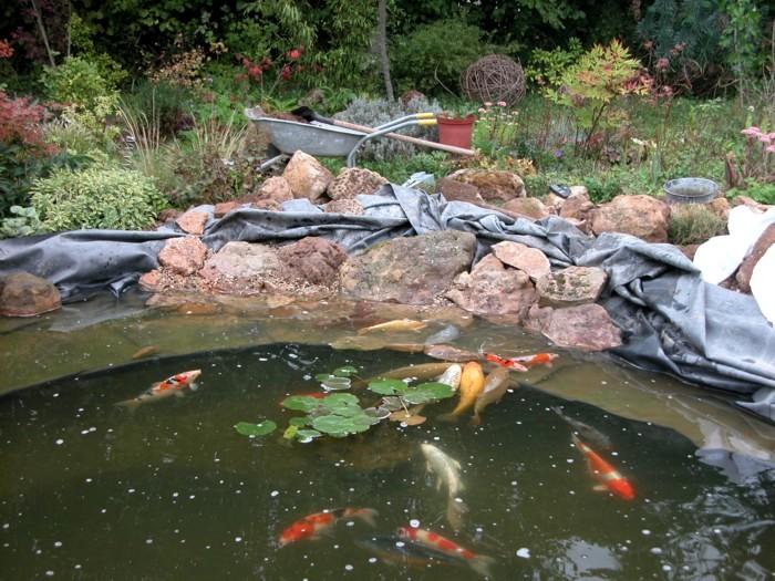 Aménagement Du Bassin De Nino Forum Bassin