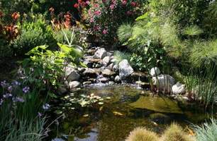 Natural-look-of-the-koi-pond-adds-to-the-beauty-of-the-landscape