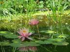 https://www.forum-bassin.com/photos/i.php?/upload/2013/07/10/20130710235814-b7549a65-th.jpg