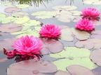 https://www.forum-bassin.com/photos/i.php?/upload/2013/08/04/20130804060716-26c7b04b-th.jpg
