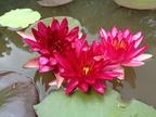 https://www.forum-bassin.com/photos/i.php?/upload/2013/08/04/20130804060717-e78c4ead-th.jpg