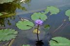 https://www.forum-bassin.com/photos/i.php?/upload/2013/08/10/20130810204206-989e95c2-th.jpg
