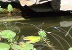 https://www.forum-bassin.com/photos/i.php?/upload/2014/06/14/20140614152934-02c0ce9b-th.jpg