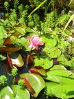 https://www.forum-bassin.com/photos/i.php?/upload/2014/06/14/20140614162425-11131da6-th.jpg