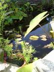https://www.forum-bassin.com/photos/i.php?/upload/2014/06/18/20140618000147-ca8fb729-th.jpg