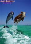 https://www.forum-bassin.com/photos/i.php?/upload/2014/06/27/20140627104323-1763c8ab-th.jpg