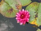 https://www.forum-bassin.com/photos/i.php?/upload/2014/07/19/20140719204543-51b5f11a-th.jpg
