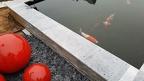 https://www.forum-bassin.com/photos/i.php?/upload/2020/02/08/20200208090609-7b9b3399-th.jpg
